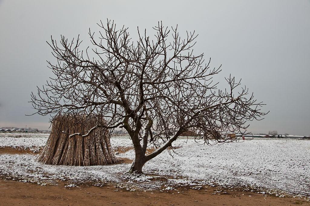El Pla De Grau Nevat
