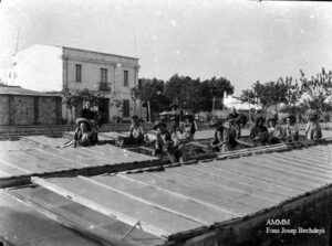 Dones i homes cuidant els planters a Malgrat de Mar, segurament abans del 1936