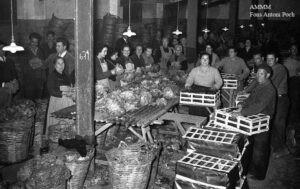 Preparació, al sindicat de pagesos, d´enciam per a l´exportació. Imatge del febrer de 1959.